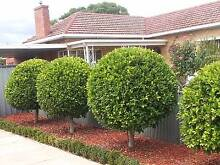 A BETTER GARDENING AND MOWING SERVICE WORKING ALL AREAS NORTH Tea Tree Gully Tea Tree Gully Area Preview
