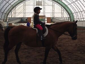 Beginner safe registered QH mare Prince George British Columbia image 4