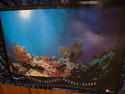 Kalender Korallenriff Tiefsee tauchen Unterwasser