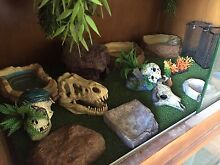 Reptile accesories Seaton Charles Sturt Area Preview