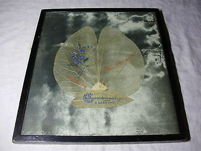 1924 PITCAIRN ISLANDS Skeleton Leaf Picture TREE PLANTED By JAMES COOK?