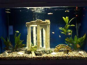 30 gallon fish tank with fish