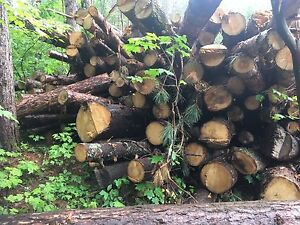 Assorted red pine logs for sale B.O.
