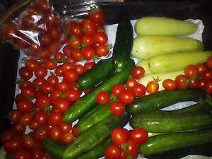 Vegetables for sale only the best Merbein South Mildura City Preview