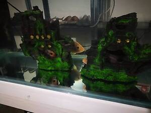 fish 3ft aquarium complete etc. Cranbourne East Casey Area Preview