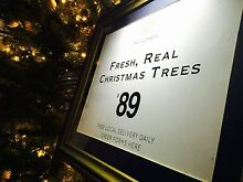 Christmas Tree Real Fresh! Cabarita Canada Bay Area Preview