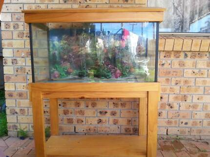 Aquarium/Fish tank Plumpton Blacktown Area Preview