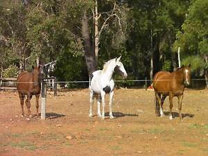 """""""Thank God It's Friday"""" group lessons for horse lovers Roleystone Armadale Area Preview"""