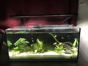 Fish tank Aqua one  in excellent condition Fairfield East Fairfield Area Preview