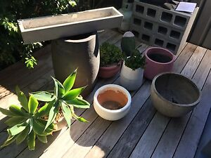 Pots and Plants Scarborough Stirling Area Preview
