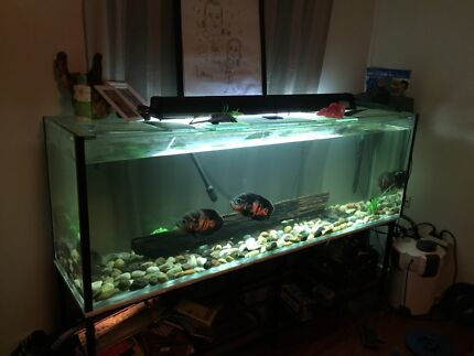 6ft tank with everything you need