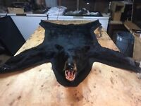 Forever wild Taxidermy