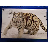 White Snow Tiger Mystical Fantasy Eyes Picture Art Poster Wall Print Decor 24X36