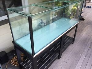 Fish tank/Terrarium Eatons Hill Pine Rivers Area Preview