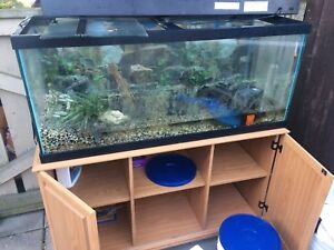 75 GALLON FISH TANK WITH STAND AND EVERYTHING NEEDED EVEN FILTER