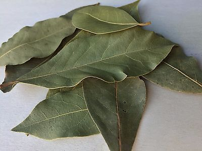 Bay Leaf, Laurus nobilis WHOLE ~ Sacred Herbs and Spices from Schmerbals (Whole Bay Leaf)