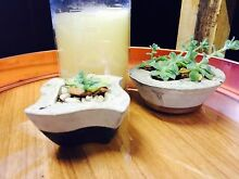 Cement Succulents and cement candles West Hobart Hobart City Preview