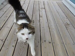 Does anyone know this cat?