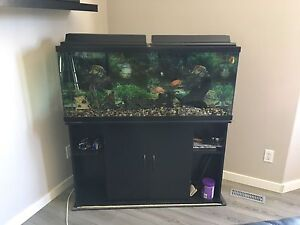 55 Gallon tank with stand, accessories and fish