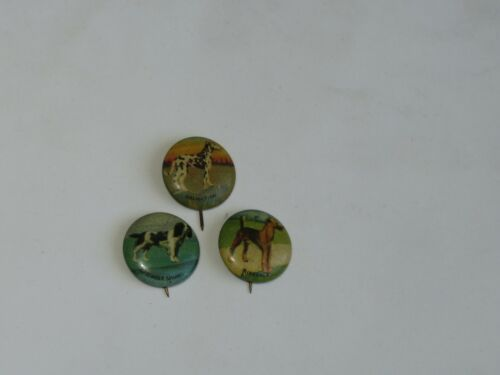 3 Vintage DOG Pin Back Buttons Dalmatian Springer Spaniel Airedale dogs Canine