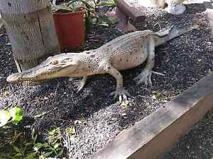 4 foot crocodile statues Wattle Grove Kalamunda Area Preview