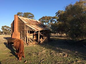 Wanted Old Farm Country Timber Brick Houses FREE Removal Demolition Tempe Marrickville Area Preview