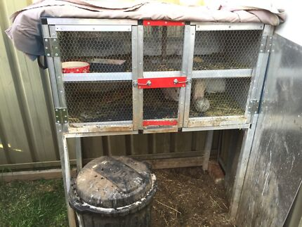 Dwarf rabbits and hutch  Raby Campbelltown Area Preview