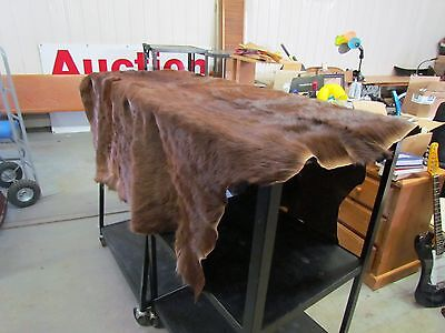 """WHOLE HORSE HIDE - DARK COLOR COMMERCIALLY TANNED HIDE APPROX 68"""" BY 72"""""""