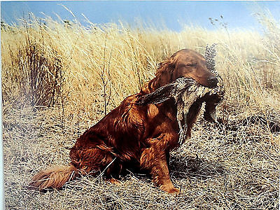 RETRIEVER DOG PICTURE BIRD DOG HUNTING ART PRINT 16X20