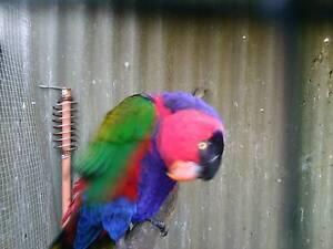 BIRDS FOR SALE Windsor Gardens Port Adelaide Area Preview