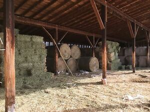 Hay in small bales
