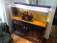 4ft fish tank complete setup Merewether Newcastle Area Preview