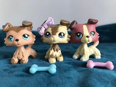 3X Littlest Pet Shop LPS Collie Dog Puppy Authentic + LPS Accessories