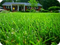 *Grass Cutting & Spring Clean Ups & Aerations*