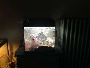 Saltwater fish tank for your ps4 and cash