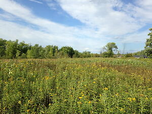 Beautiful 5 Acre lot with woods and field by Trent River Belleville Belleville Area image 6
