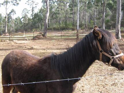 young gelding for sale