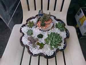 succulent arrangements Charlestown Lake Macquarie Area Preview