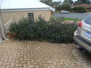 Pavers heavy duty Eden Hill Bassendean Area Preview