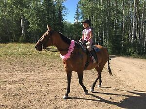Beginner safe registered QH mare Prince George British Columbia image 3