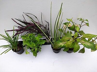 Pflanzenset für Paludarien und terrarium oder Vivarien