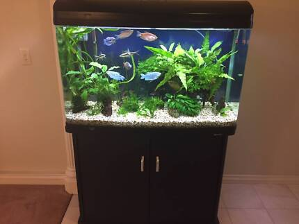 980T Aqua One 240L Curved Glass Aquarium with Fish and Plants
