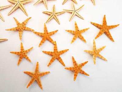 50 Tiny Mini Starfish Tan Flat 1/2-3/4