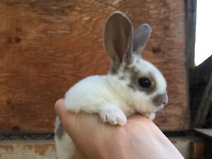 Various Baby Rabbits Looking for New Homes