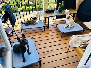 Couple with 3 dogs looking for an apartment