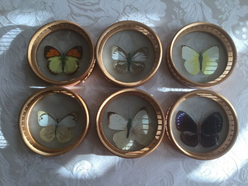 Vintage Butterfly Coasters (6) With Bamboo Carrier, Real Butterfly Wings