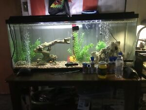 Looking for free tanks or unwanted fish
