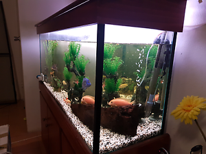 Tropical fish tank setup $400 Bankstown Bankstown Area Preview