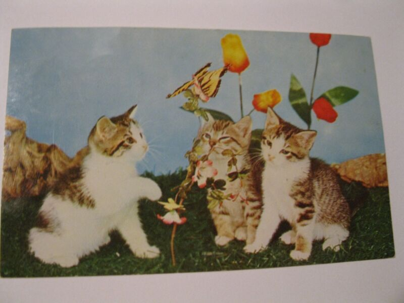Vintage Postcard Kittens Tulips Cat 1966 Canada Three Little Butterfly Flowers