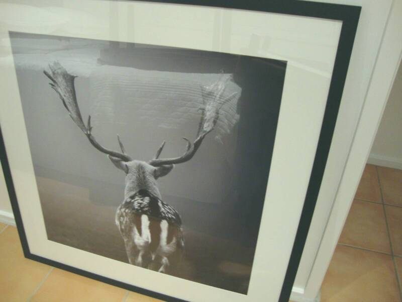 Large Deer Framed Picture | Picture Frames | Gumtree Australia ...